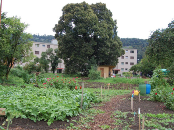 Jardins potagers à Aarburg-Nord, Photo: Commune Aarburg.